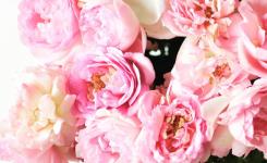 flower_29