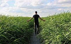 high-grass-1504280__340