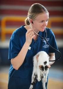 veterinarian-577826__340